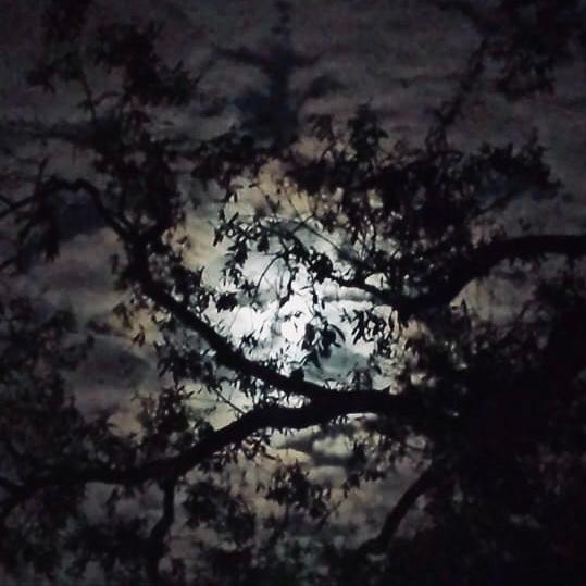 Finding Light in the Dark